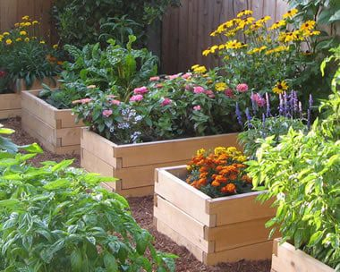 Tips on Building Raised Beds