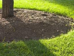 Did you know Mulch is an insulator?