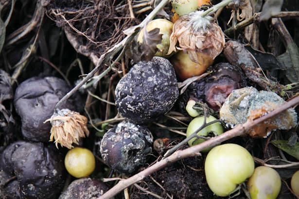 How to prevent making a dangerous compost pile