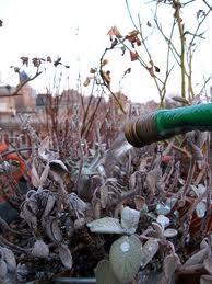 Colorado Winter Watering Tips