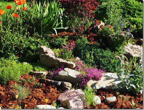 Mulch can help your plants beat the Heat