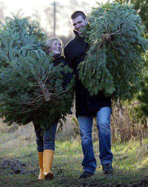 Helpful Tips on Selecting a Real Christmas Tree