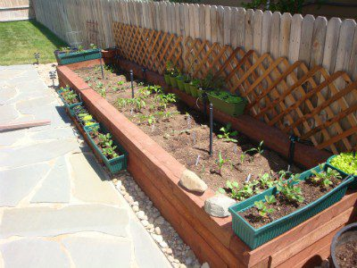 A Healthy Garden for a Healthy Lifestyle