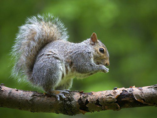 Seeing Squirrel Damage in your yard?