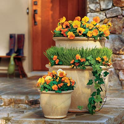 Get Brilliant Fall Color with Container Plants