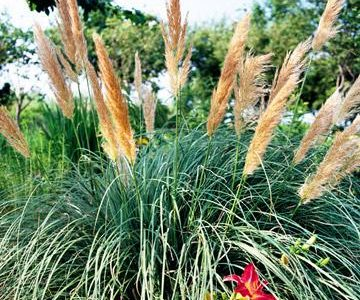 Low-Maintenance Ornamental Grasses Great for Colorado Landscapes