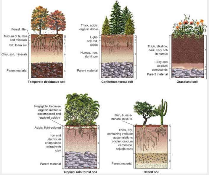 Geol 102 terrestrial sedimentary environments for Garden soil definition
