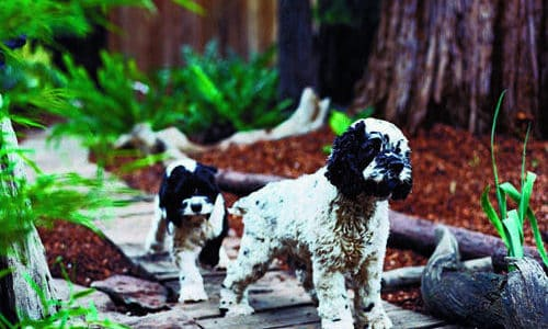 Landscape Design Tips for Pets & Plants