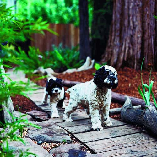 Mulch Backyard Dogs : How to Create a Dog Friendly Yard  KG Landscape Management