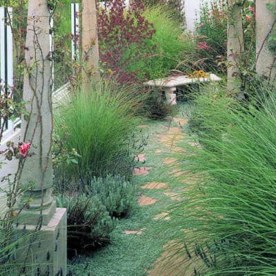 ornamental grass bordering a walkway