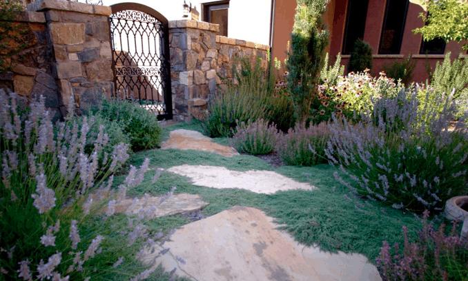 Lawn Alternatives To Love Lifescape Colorado