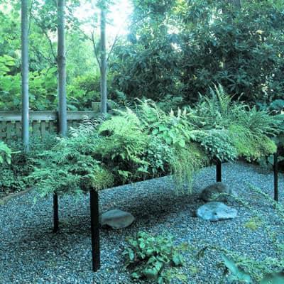 low-water ferns