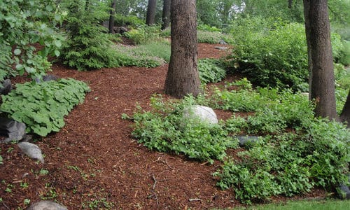 Tips for Maintaining a Landscape
