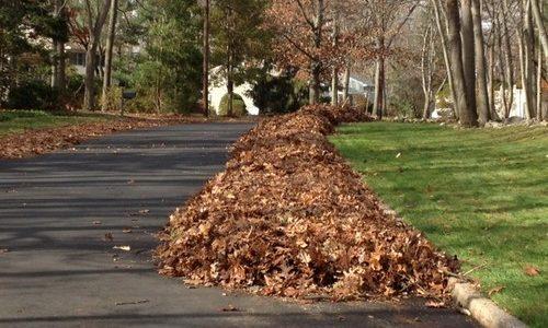 Take Advantage of Fall Leaves
