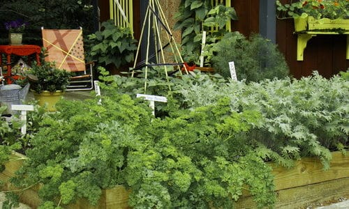 Start a Cool Season Vegetable Garden