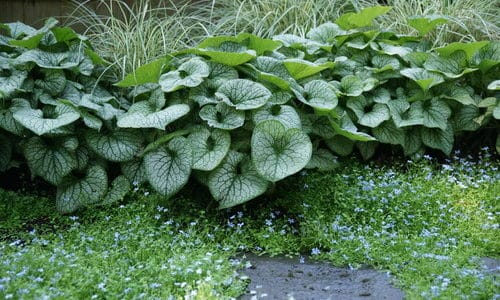 Foliage Fun: Adding Texture to Your Garden