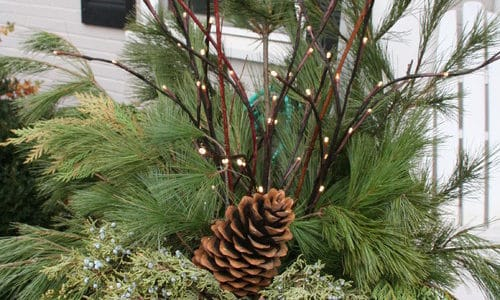 Add Holiday Cheer to Winter Container Gardens