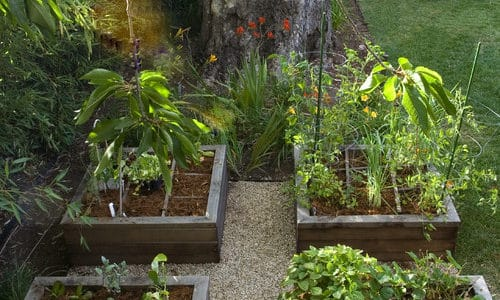 The Benefits of Using Organics in Your Landscape
