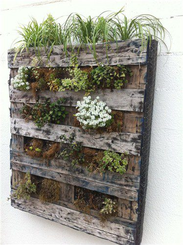 pallet-plants-vertical-garden-landscaping-network_4358