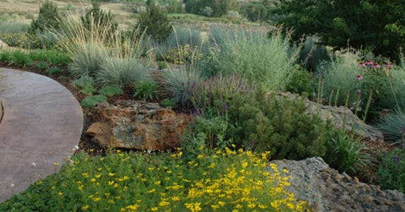 Planning Ahead – The 7 Principles of Xeriscape