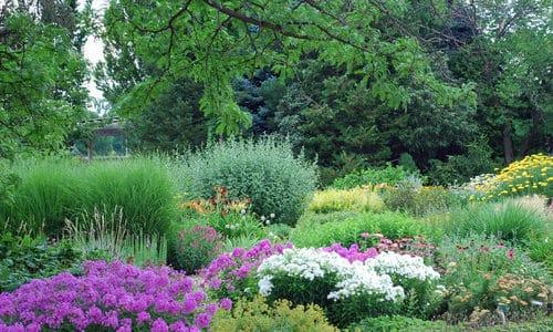 A Colorado Gardener's April Checklist