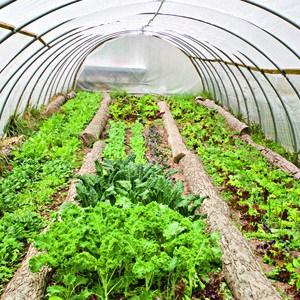 A Colorado Gardener's May Checklist