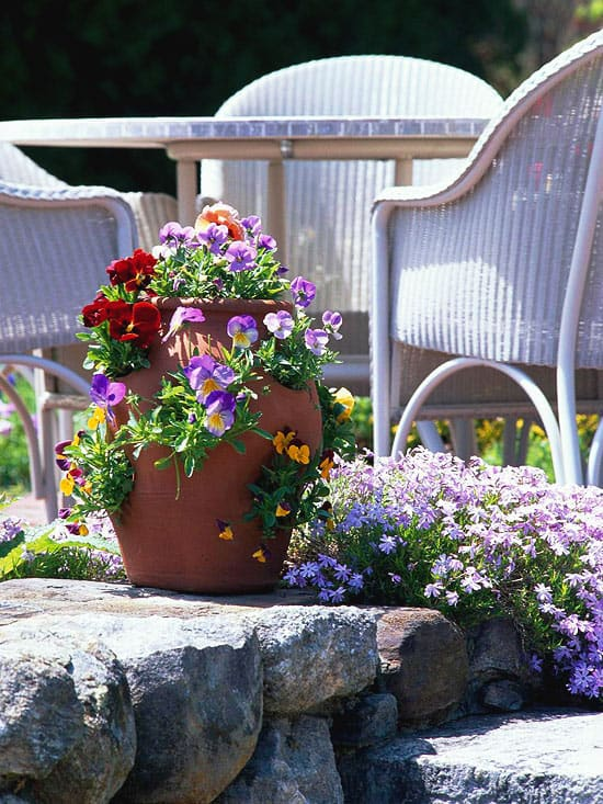Celebrate spring with colorful container gardens lifescape - Better homes and gardens container gardening ...
