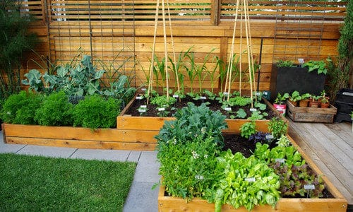 Grow a Thriving Vegetable Garden This Summer