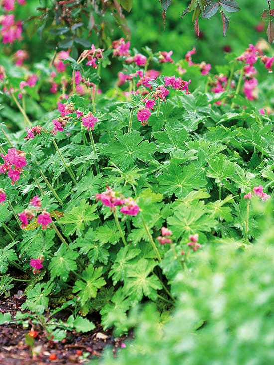 Top perennials for sheltered gardens lifescape Plants that love sun and heat