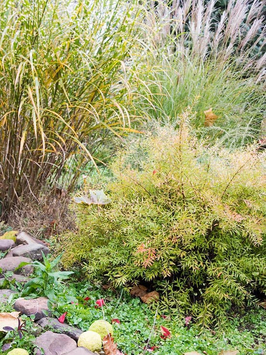 Landscaping inspiration for your fall garden lifescape for Gardening tips colorado
