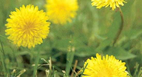 Noxious Weed Prevention Tips