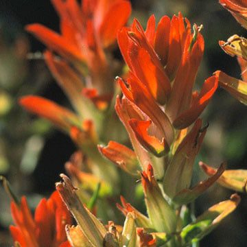colorado landscape designer