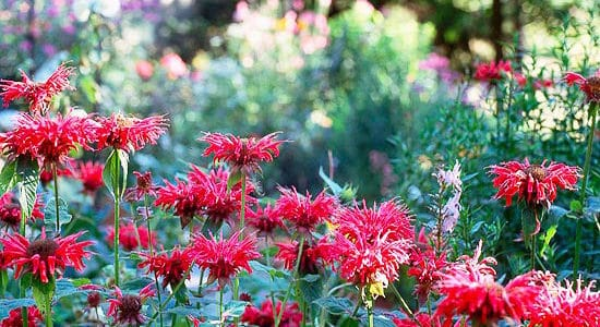 "Don't ""Fall"" Victim to These Gardening Blunders"