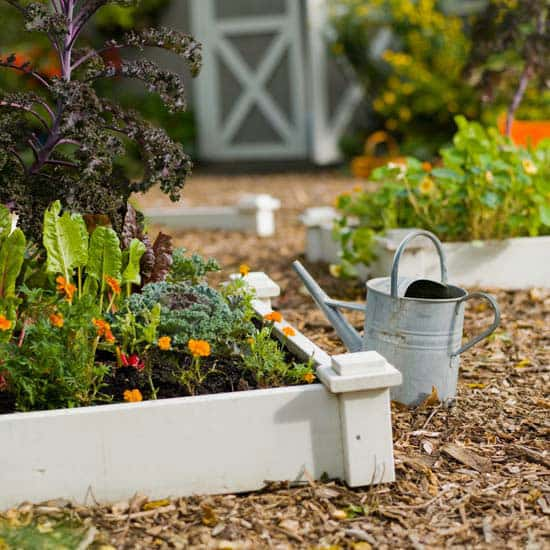 Tips for starting a garden in the fall lifescape for Starting a vegetable garden