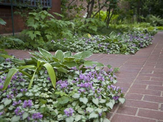 denver garden design