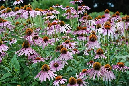 Gorgeous Plants for Landscape Edging