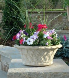 Tips for Starting a Beautiful Container Garden