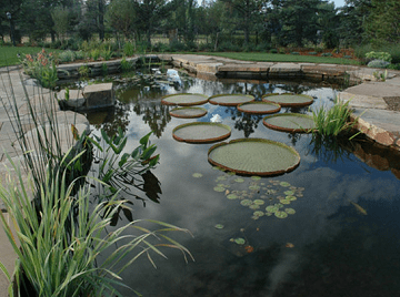 Essential Tips for Incorporating Water Sounds Into Your Garden