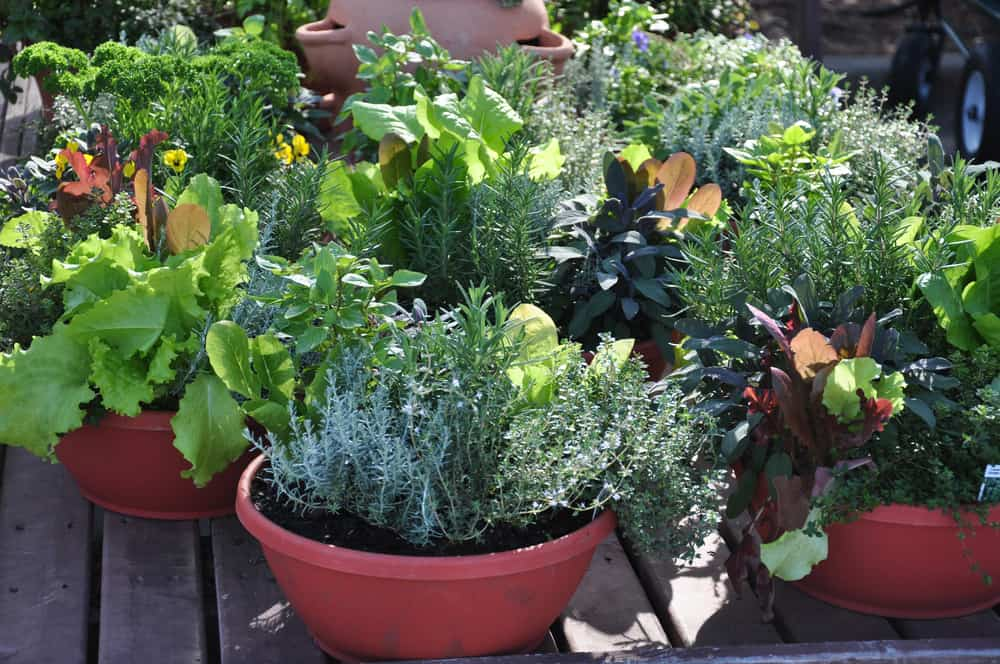Funky colorful large garden containers add landscape - Large container gardening ...
