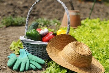 Benefits to Gardening & the Impact to Your Life & Family