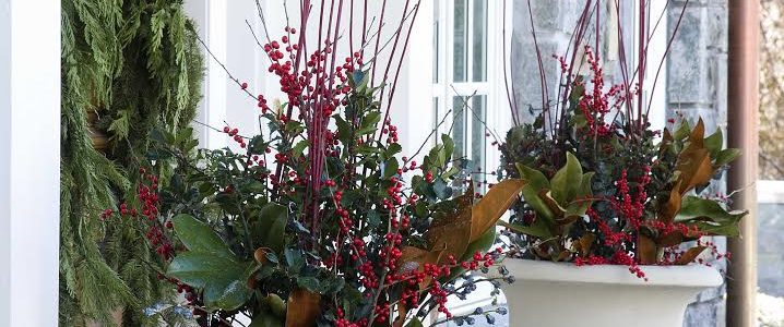 Fall and Winter Containers: Keep the Color Alive