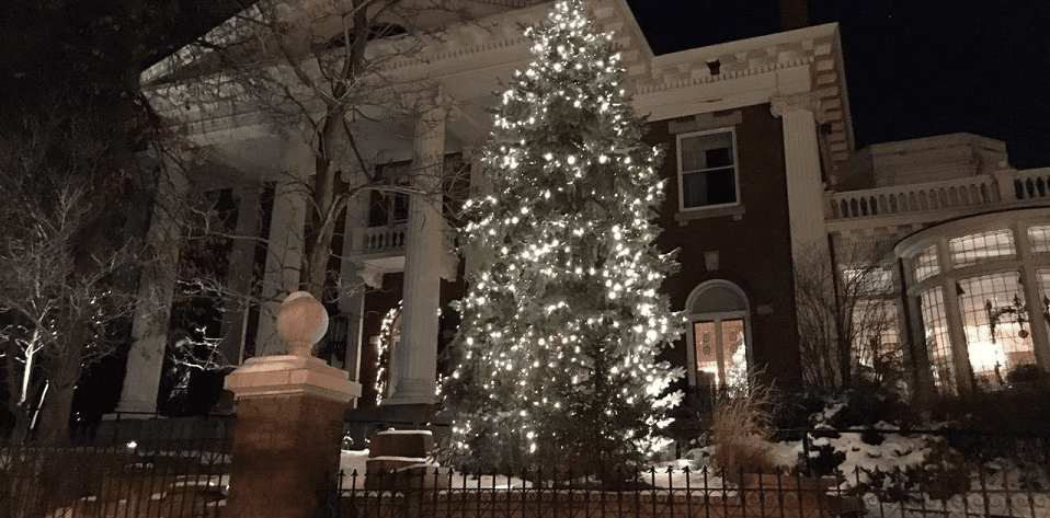Governor's Mansion Tree