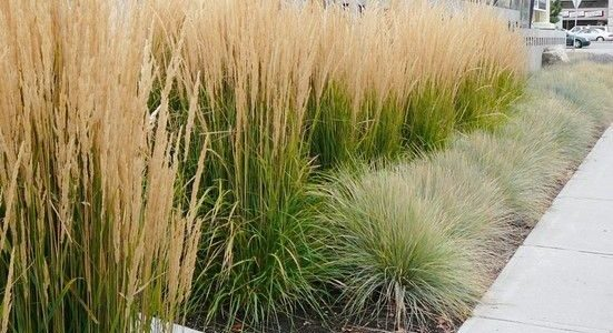 Gorgeous Grasses To Design With