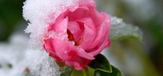 Landscape Winter Watering Tips