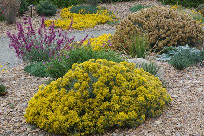 Statement Shrubs for Your Colorado Landscape