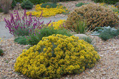 Statement Shrubs For Your Colorado Landscape Lifescape Colorado