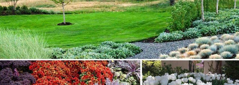 Best Landscape Enhancements for Fall