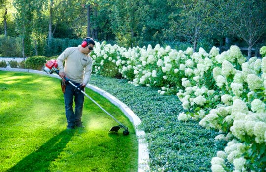 High Quality Maintenance Protects your Landscape Investment