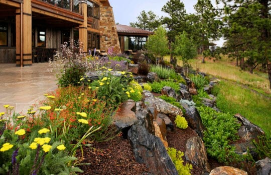 Keep your Colorado Landscape rich and colorful with perennial gardens