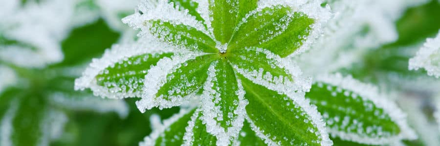 Protect your home and landscape with proper winterization